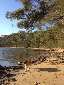 Four-legged friends are welcome to enjoy the many coves below your accommodation
